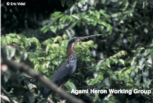 Agami Heron Working Group