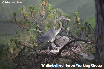 White-bellied Heron Working Group